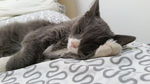 眠っている猫