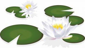 蓮の花の絵